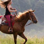 cedar-creek-riding-stables-1500x609