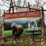 rezervatia-de-ursi-libearty-zarnesti-1